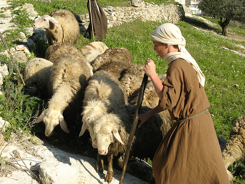 Nazareth-village-recreation-of-shepherds-tending-sheep-2000-years-ago.-JOHN-LARUE